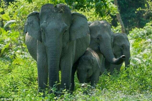 Casal morre após elefante pisoteá-lo ao se assustar com flash de câmera