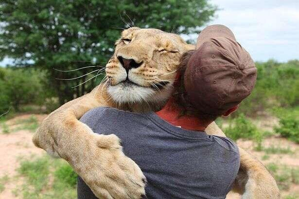 Abraço comovente de leoa em homem que a salvou se torna documentário