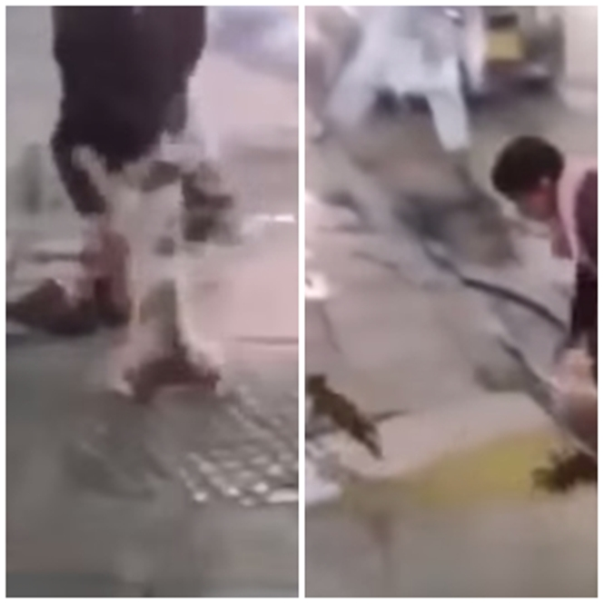 Gato corajoso espanta homens que tentavam importunar seus filhotes