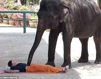 """Spa na Tailândia oferece massagem a turistas que tiverem coragem de serem """"esmagados"""" por elefantes"""