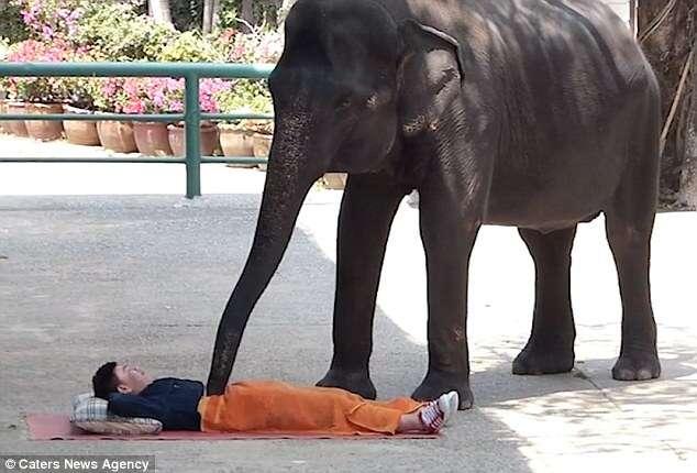 """Spa na Tailândia oferece massagem a turistas que tiverem coragem de serem """"esmagados"""""""