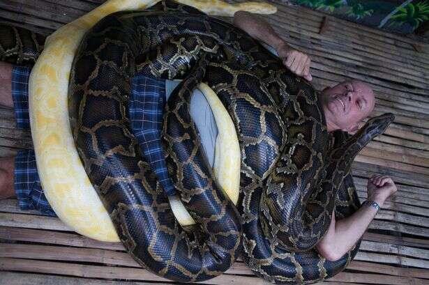 Zoológico oferece serviço de massagem a visitantes com cobra
