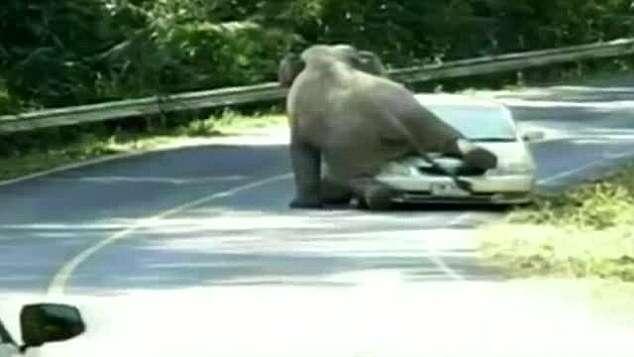 Elefante esmaga carro cheio de passageiros