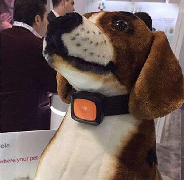 Smartphone para cães chega ao mercado em junho