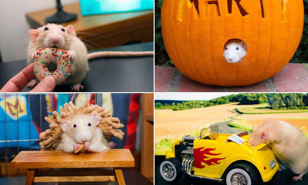 Confira sessão de imagens de hamster em situações curiosas que vem fazendo sucesso no instagram