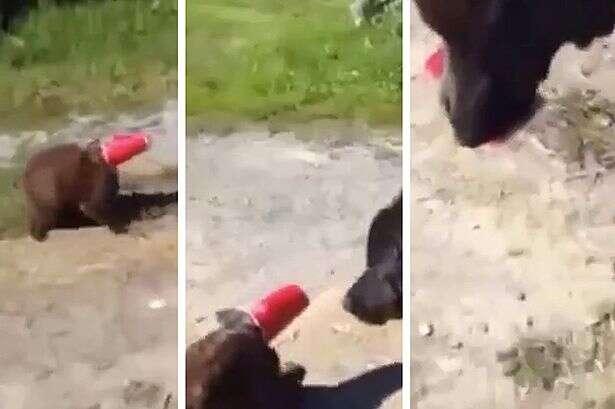 Gato fica com cabeça presa em copo descartável e é salvo por um cachorro