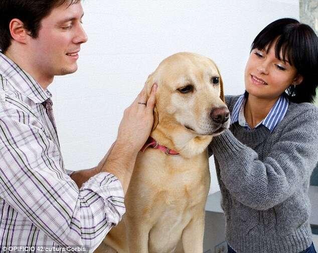 Donos de gatos são mais neuróticos que os de cães