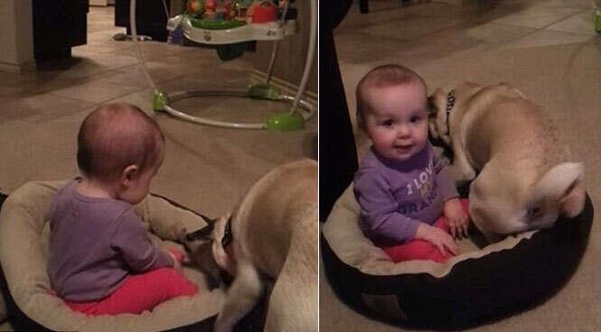 Vídeo de fofa batalha entre cão e bebê após criança invadir cama do animal faz sucesso na web