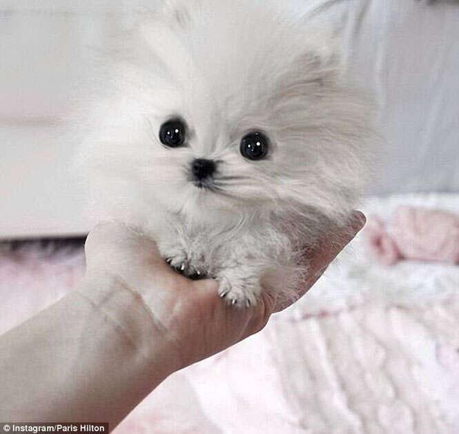 cães de pequeno porte