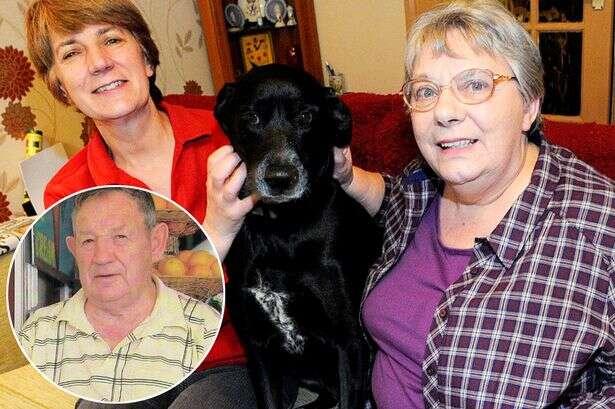 Cão pede ajuda e salva vida de seu proprietário que havia sofrido um AVC