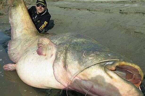 Homem deve estabelecer recorde ao pescar peixe de 2,67 metros e 120 quilos