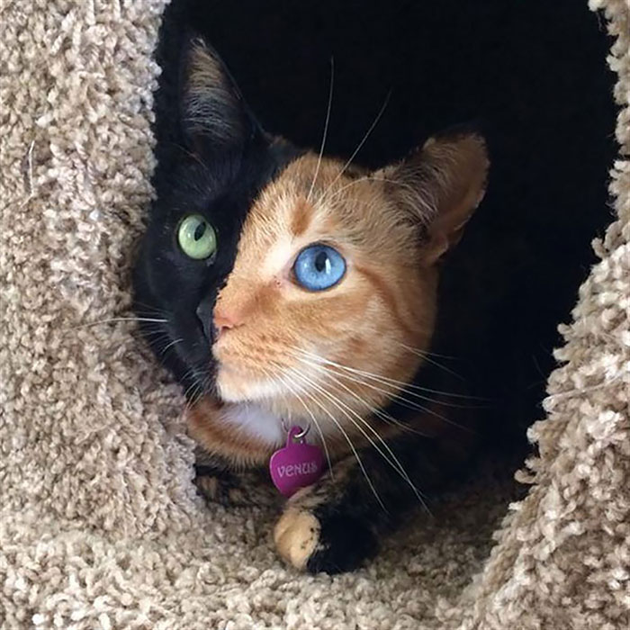 Animais com olhos de cores diferentes