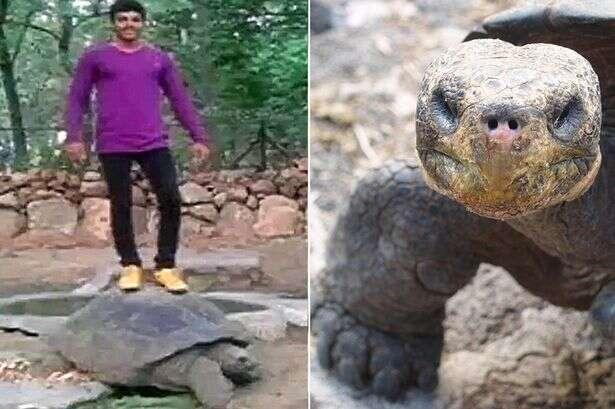 Homem posa para foto em cima de tartaruga de 120 anos e acaba preso