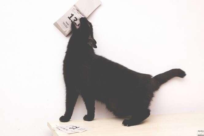 Fotos provam que os gatos pretos não trazem má sorte