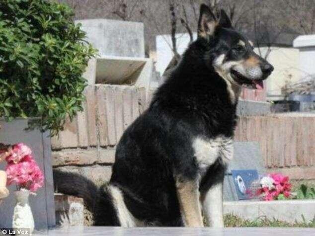Conheça o cão fiel que dorme há anos ao lado do túmulo de seu falecido dono
