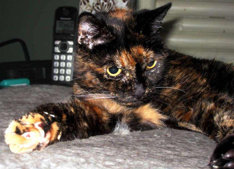 Gato mais velho do mundo completa 121 anos... na idade dos humanos