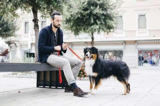 Dono com cão