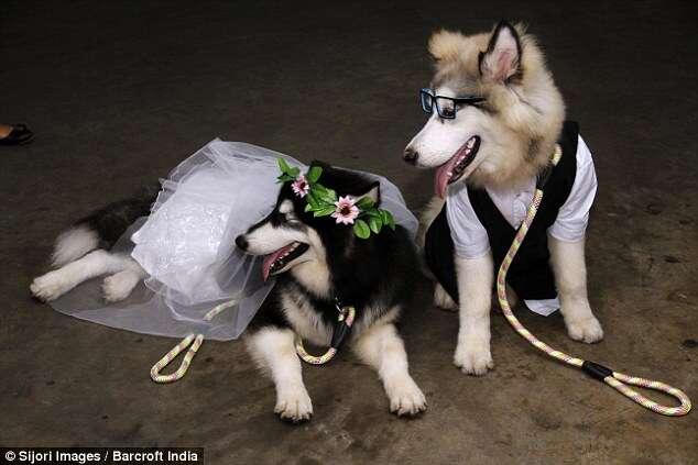 Cães se casam em cerimônia com mais de 100 convidados