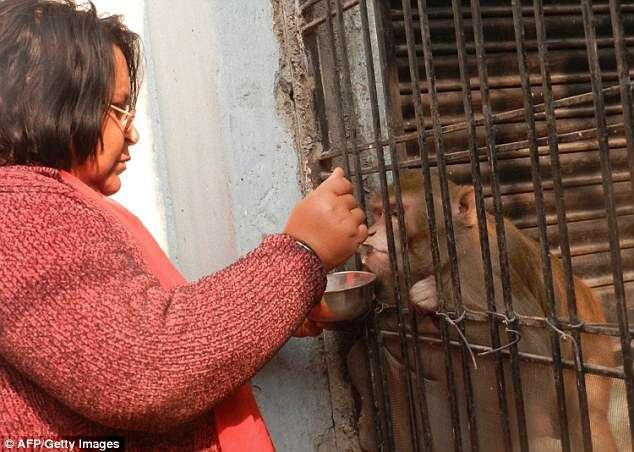 Casal rico nomeia macaco de estimação como único herdeiro