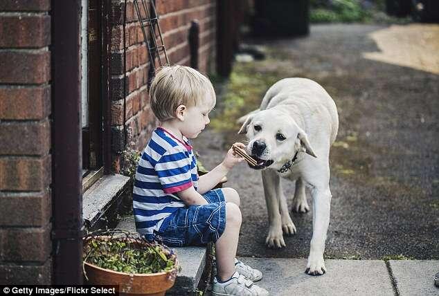 Cães descobrem quando donos estão mentindo, de acordo com estudos