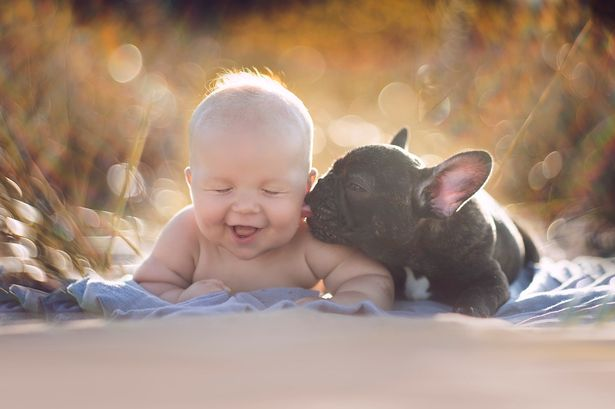 Cão bulldog e bebê se tornam melhores amigos e comovem internautas