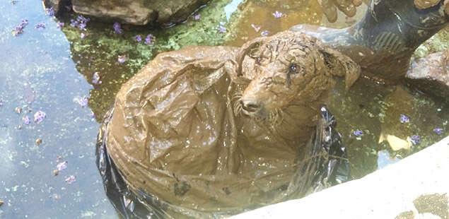 Cadela amarrada em sacola dentro de rio é salva graças a outro cão