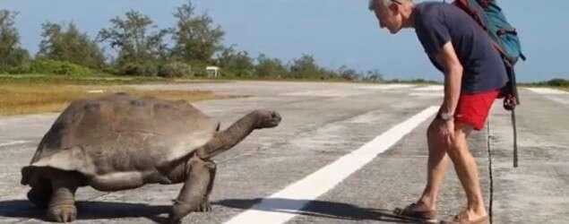 Tartaruga macho persegue homem após ele interromper seu momento de amor