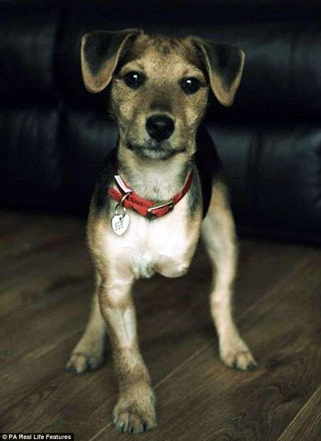 Cãozinho encontrado quase morto após ser espancado amputa pata e salva outros animais