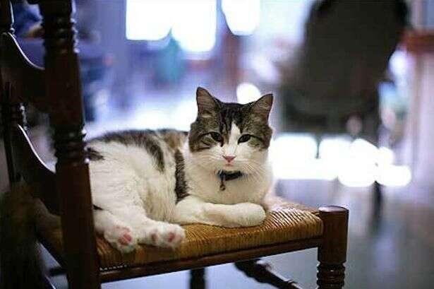 Gato vidente já previu a morte de mais de 100 pessoas