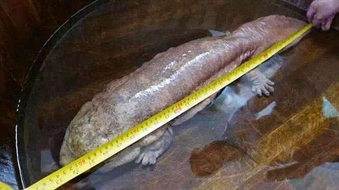 Guarda captura criatura viva extremamente rara que já habitava o planeta há milhões de anos