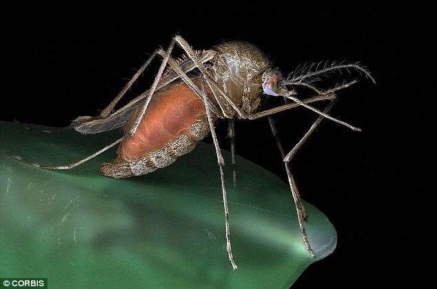 Por que algumas pessoas atraem tantos mosquitos?