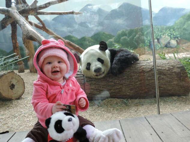 Imagem de panda sorrindo em foto ao lado de bebê comovem internautas