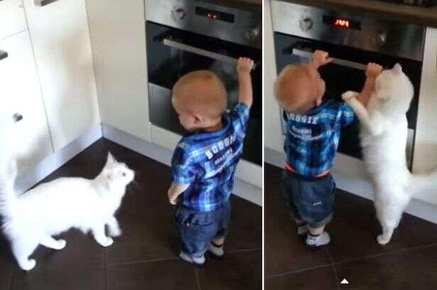 Gato herói protege criança em fogão quente