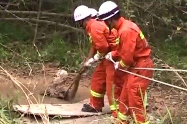 Vídeo mostra momento dramático em que idoso clama por ajuda enquanto afunda em pântano