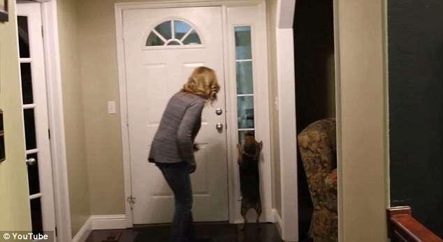 Reação de cadelinha ao rever dono após dois anos longe dele comove