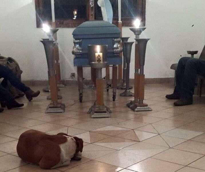 Cães de rua comparecem a funeral de mulher que os alimentava