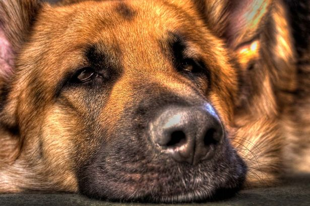 Cão fareja câncer em 30 pacientes dos 34 casos analisados