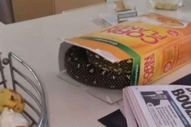 Homem leva enorme susto ao abrir caixa de cereais e encontrar cobra píton