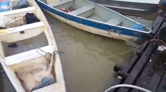Vídeo impressionante mostra o que acontece quando cardume de piranhas encontra carne