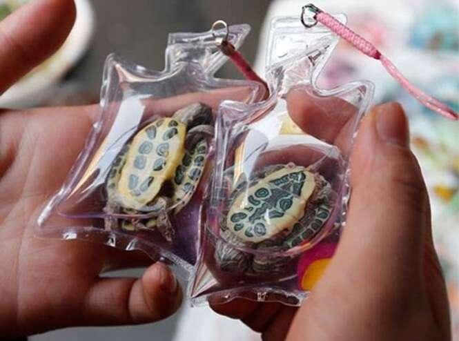 Venda de animais vivos oferecidos como acessórios causa polêmica
