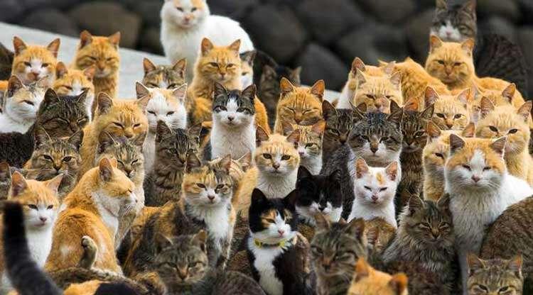 Ilha no Japão possui seis vezes mais gatos que humanos