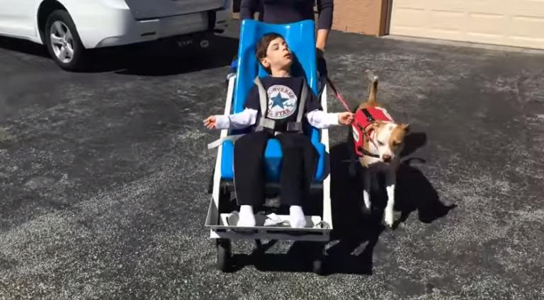 Cão e seu melhor amigo deficiente ganham batalha judicial para frequentarem escola juntos
