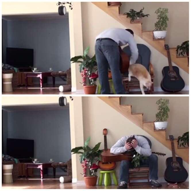 Gato se vinga derrubando vaso na cabeça de seu dono após agressor o chutar