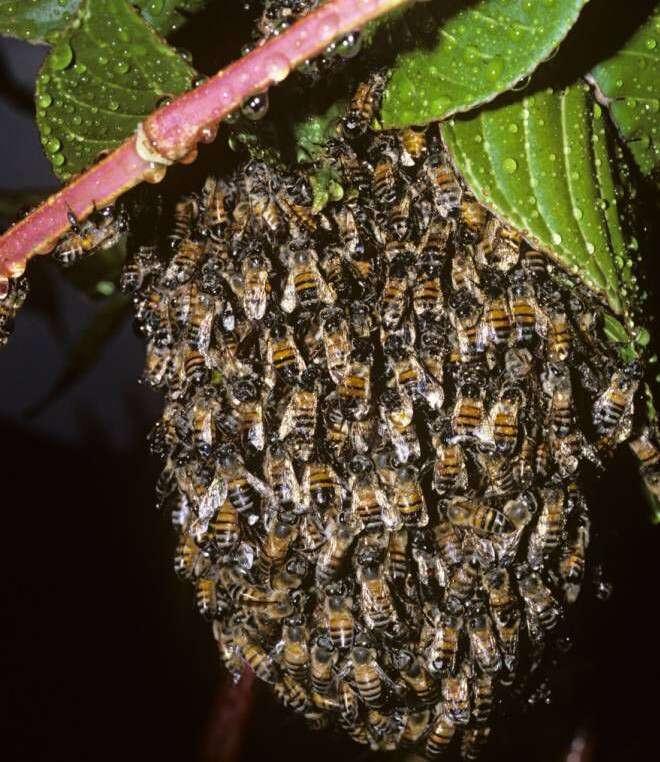 Passageiros de ônibus são picados nas partes íntimas por abelhas