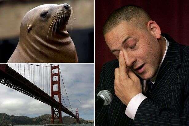 Homem é salvo por leão-marinho ao tentar cometer suicídio pulando de ponte