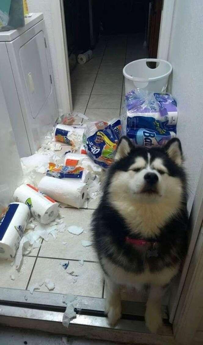 Cãozinho se entrega após bagunçar lavanderia de casa