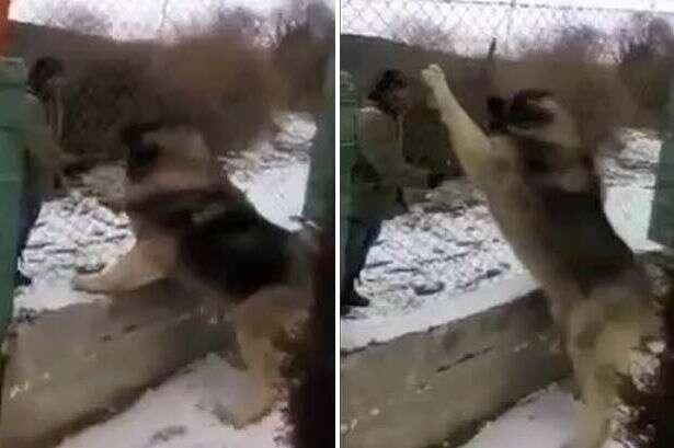 Vídeo de suposto maior cão do mundo bomba na web