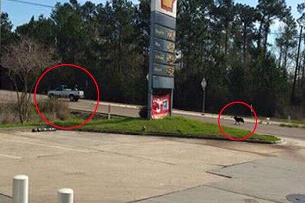 Imagem comovente mostra cão tentando alcançar caminhonete de seu proprietário depois de ser abandonado