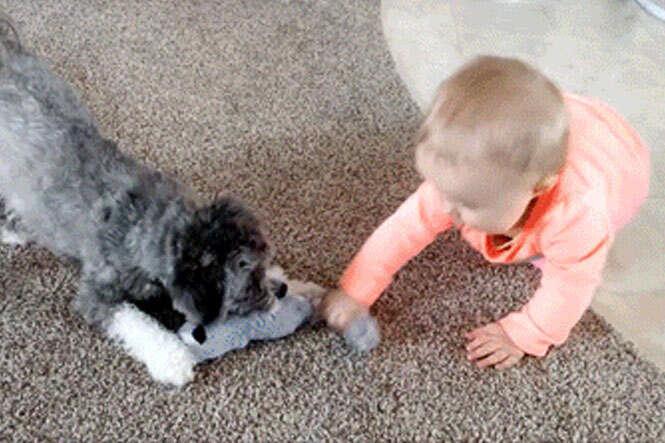 Bebê e cachorro disputando brinquedo