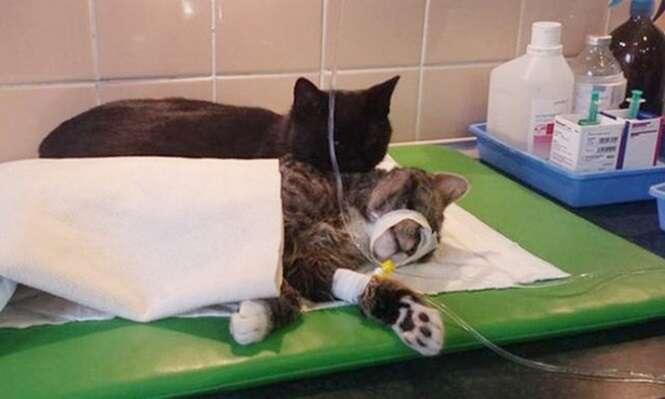 Conheça o gatinho que cuida de animais